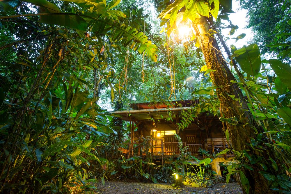 eco lodge in the rainforest in australia - upload article