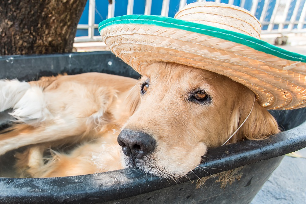 puppy with warm water pet
