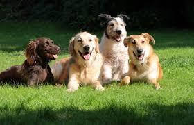 Veterinary Pets
