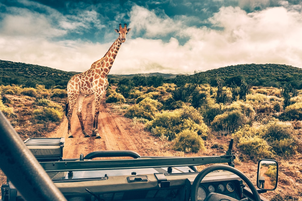 eight African safari destinations