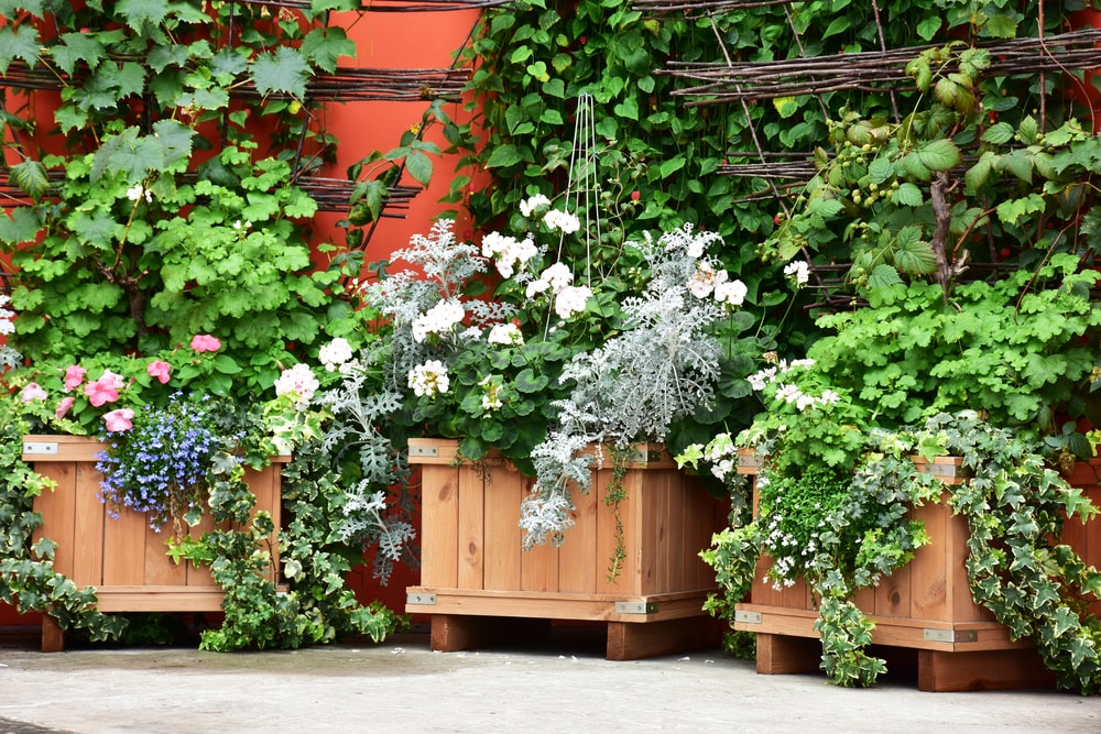 Make the Sweet-Smelling Planter Boxes