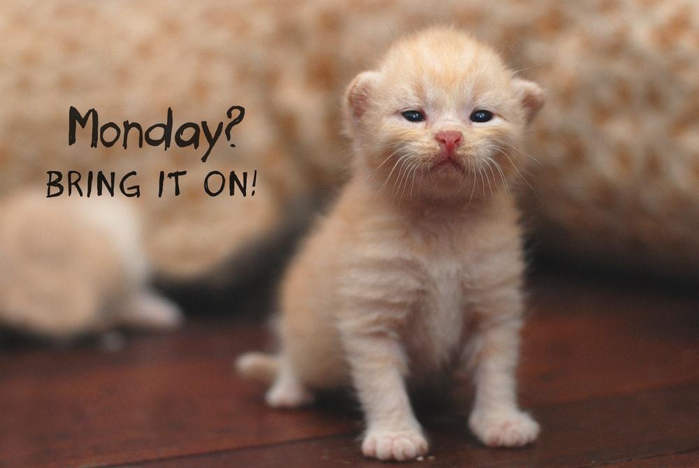 cat memese funny