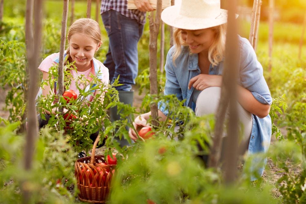 Organic FarmingBusiness Ideas Women