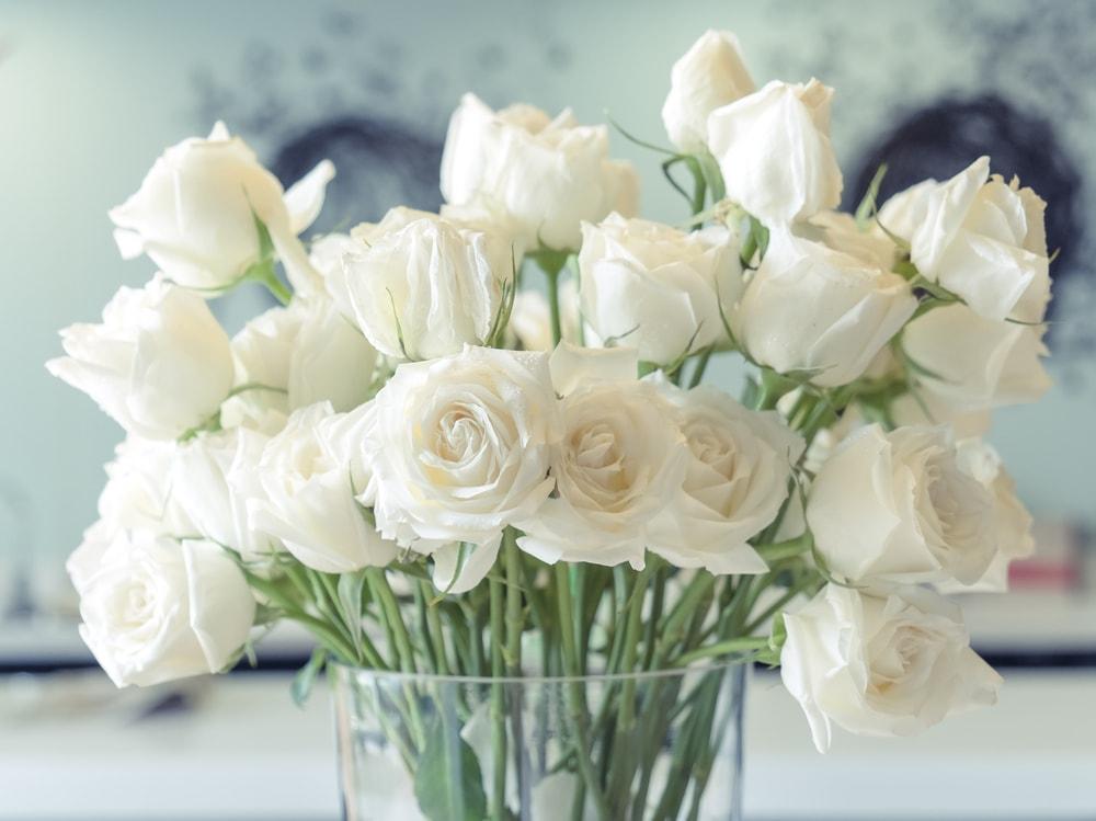 Classic White rose flower