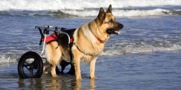 Dog Wheelchairs