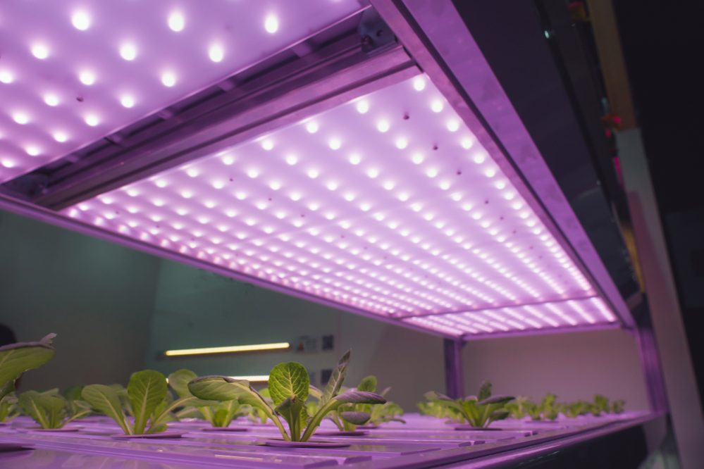 Grow LED Lights