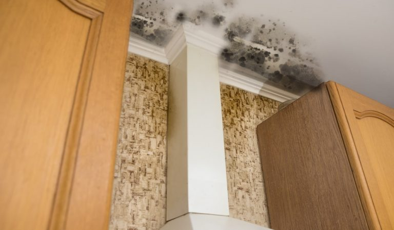 Ways to Remove Mold and Mildew on The Ceiling
