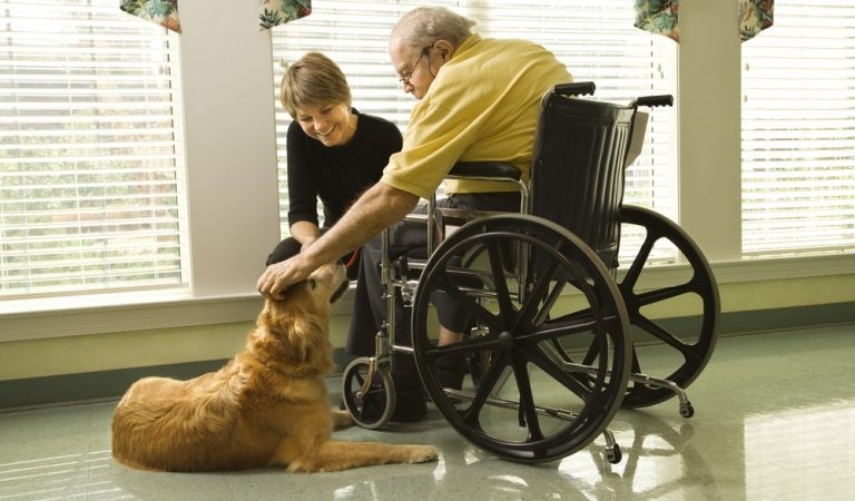 Qualities of a Therapy Dog