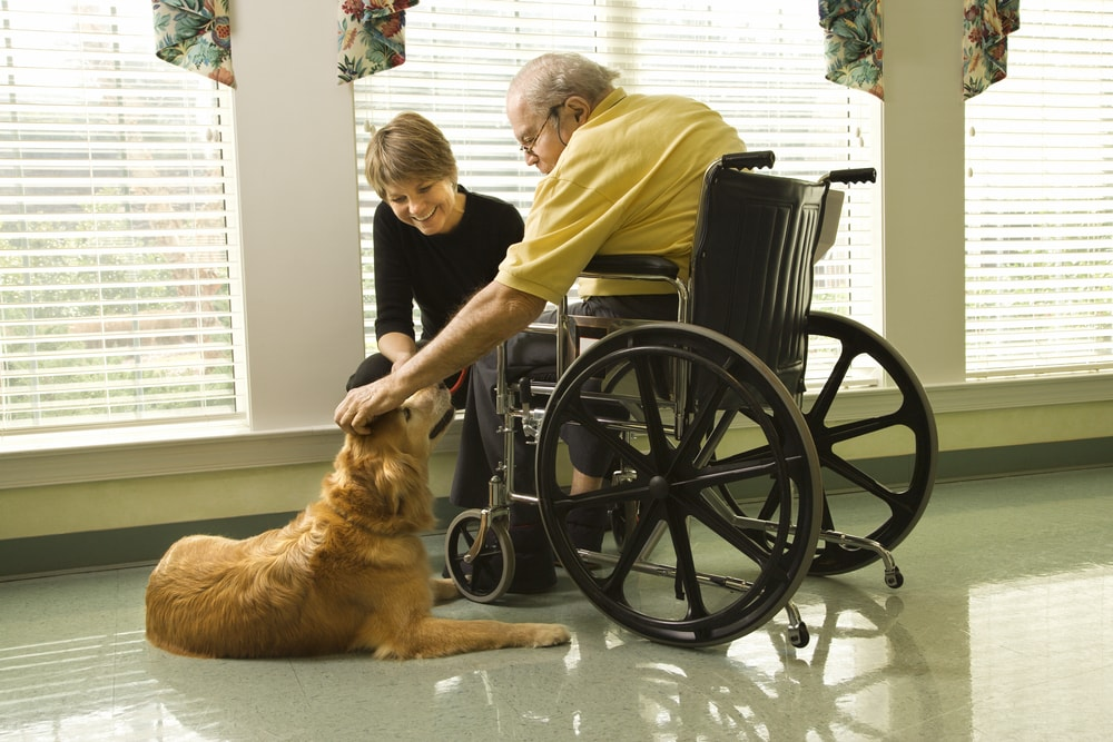 Therapy Dog pet