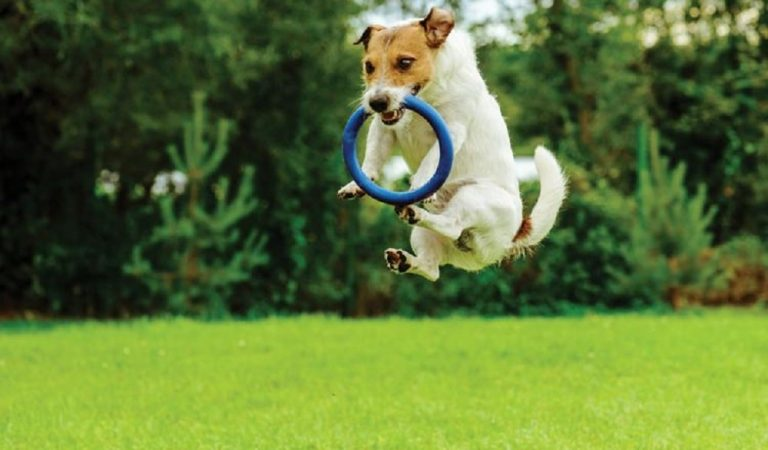 Affordable Dog Park Playground Equipment for Sale – Playground Accessories
