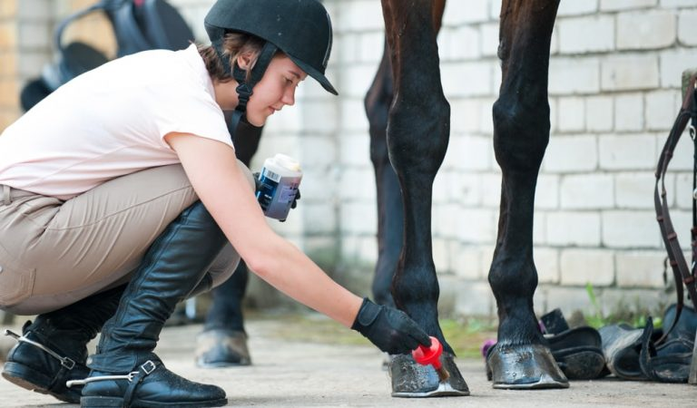 Horse Hoof Radius Rasps and Nippers for Farrier Services Professionals