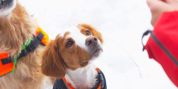 What Happens If You Give CBD To Healthy Dogs?