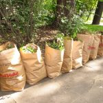Methods for Yard Waste Disposal